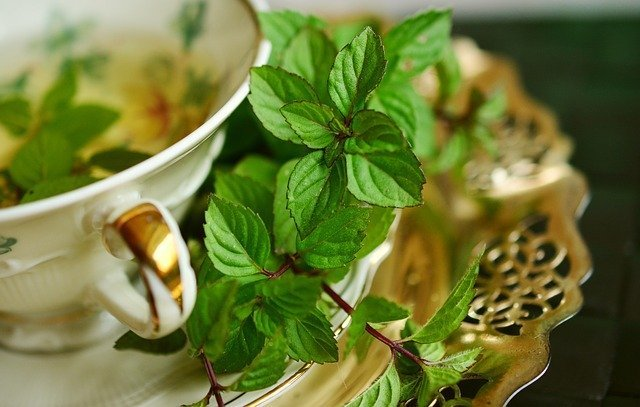 All varieties in the mint family help to boost the immune system