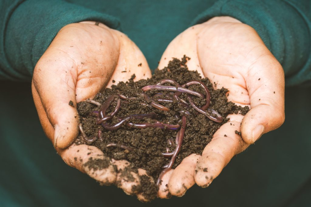 Worms are a great treat to keep your chickens laying in winter