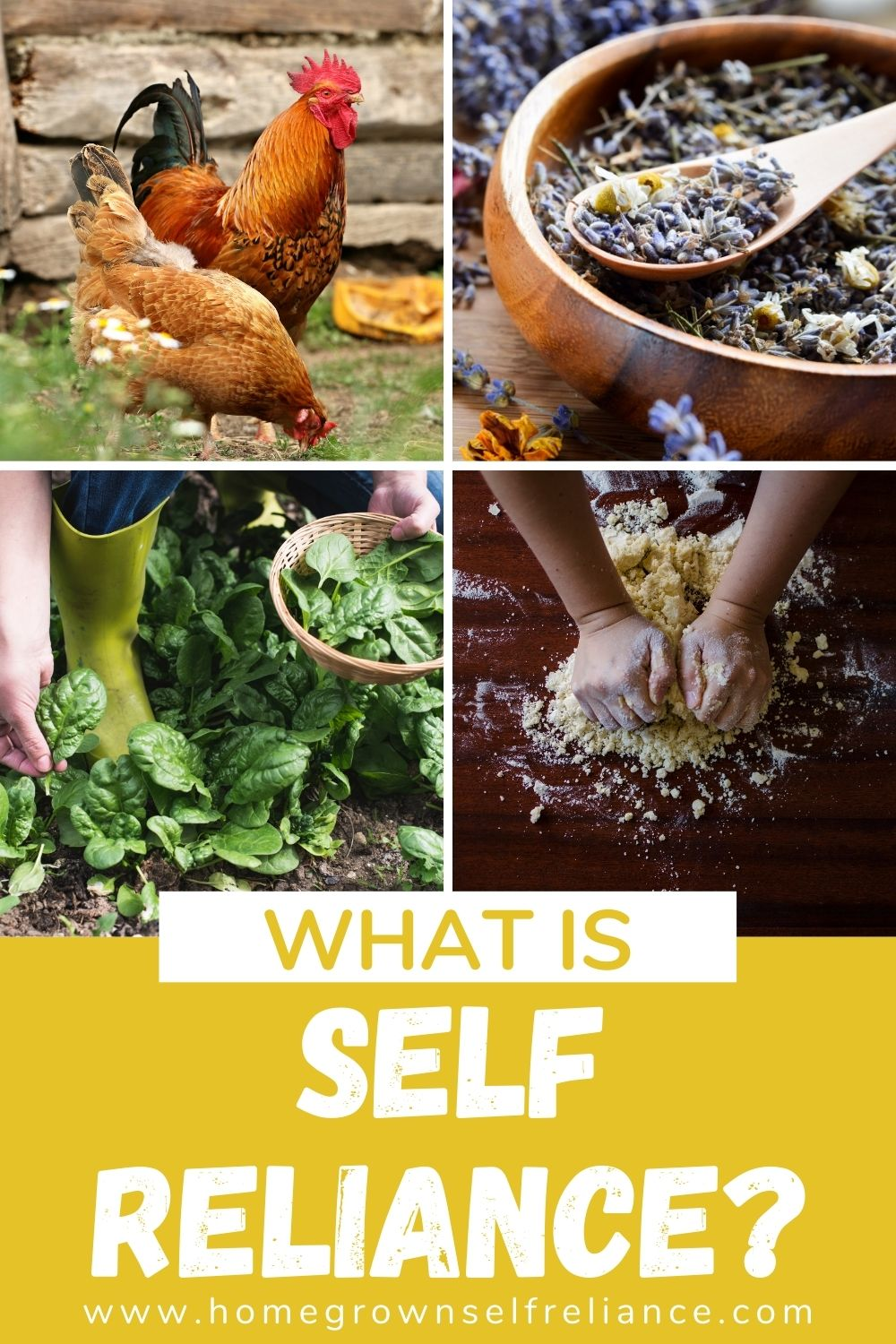 What is self reliance? Raising animals, making your own medicine, gardening, cooking from scratch