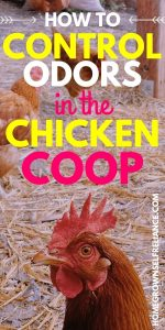 How to control odors in the chicken coop