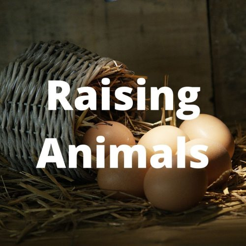 Raising Animals