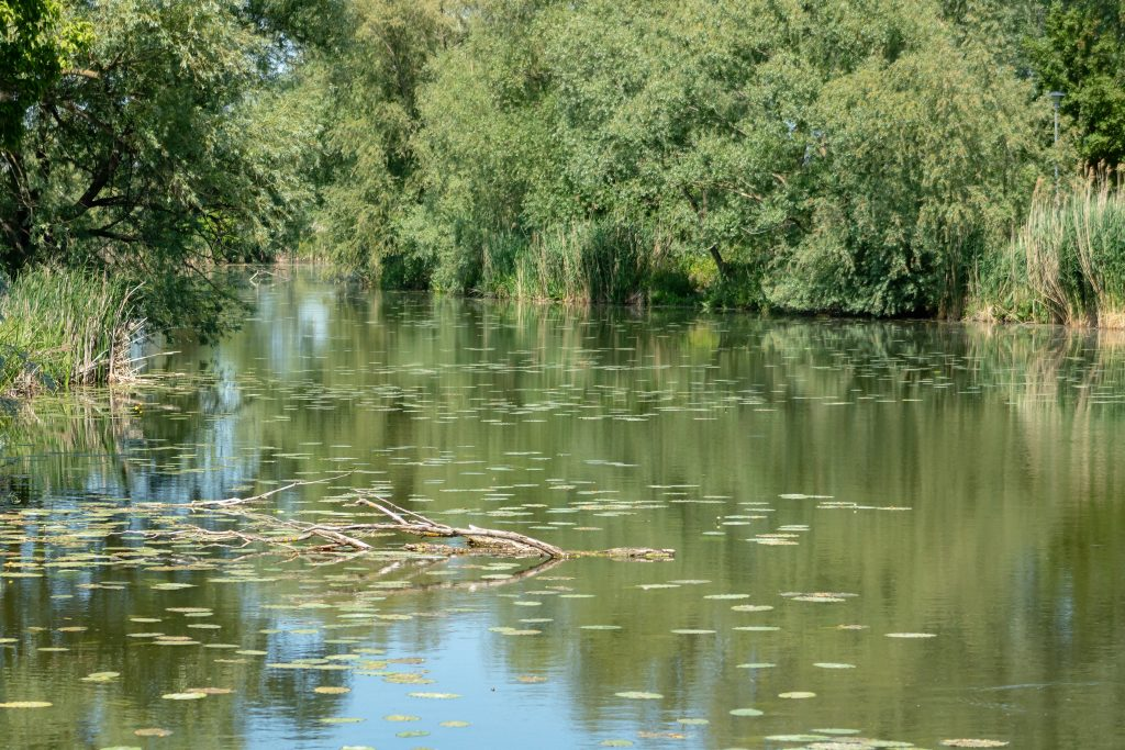 Wood ash can help reduce algae in your pond