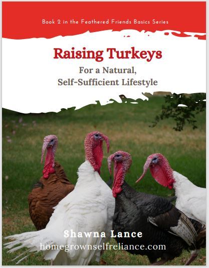 Raising Turkeys For a Natural, Self-Sufficient Lifestyle