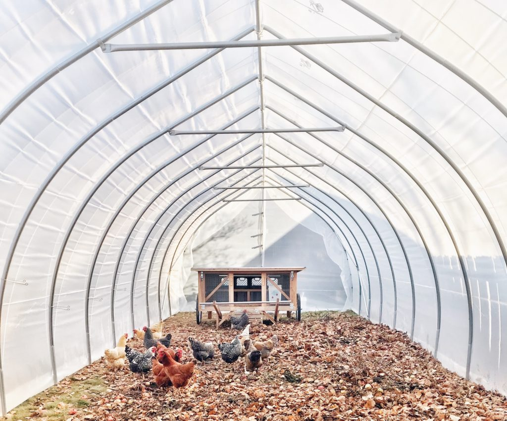 Keeping everything dry is key in controlling odors in the chicken coop