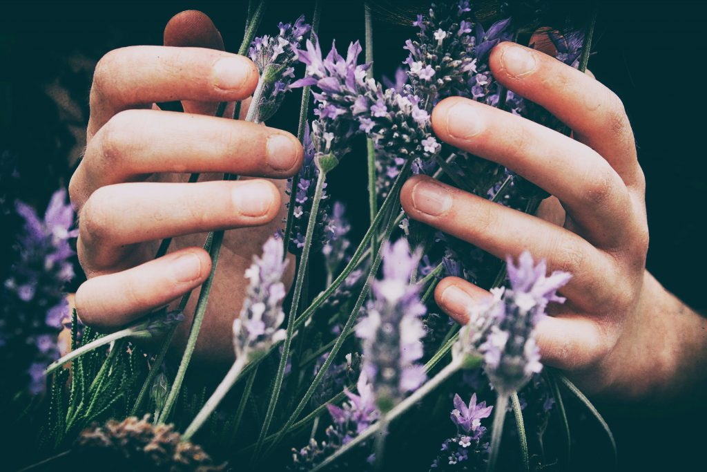 Lavender or other herbs can help in controlling odors in the chicken coop