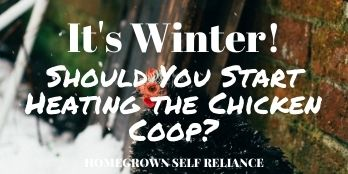It's Winter! Should You Start Heating the Chicken Coop?