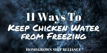 11 ways to keep chicken water from freezing