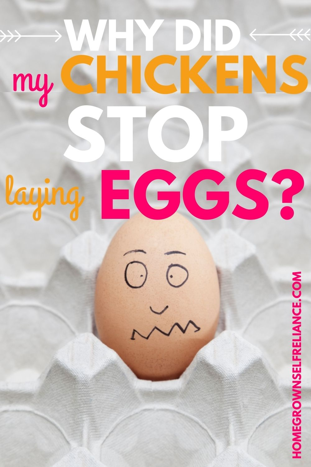 chickens stop laying eggs, Why Did My Chickens Stop Laying Eggs?