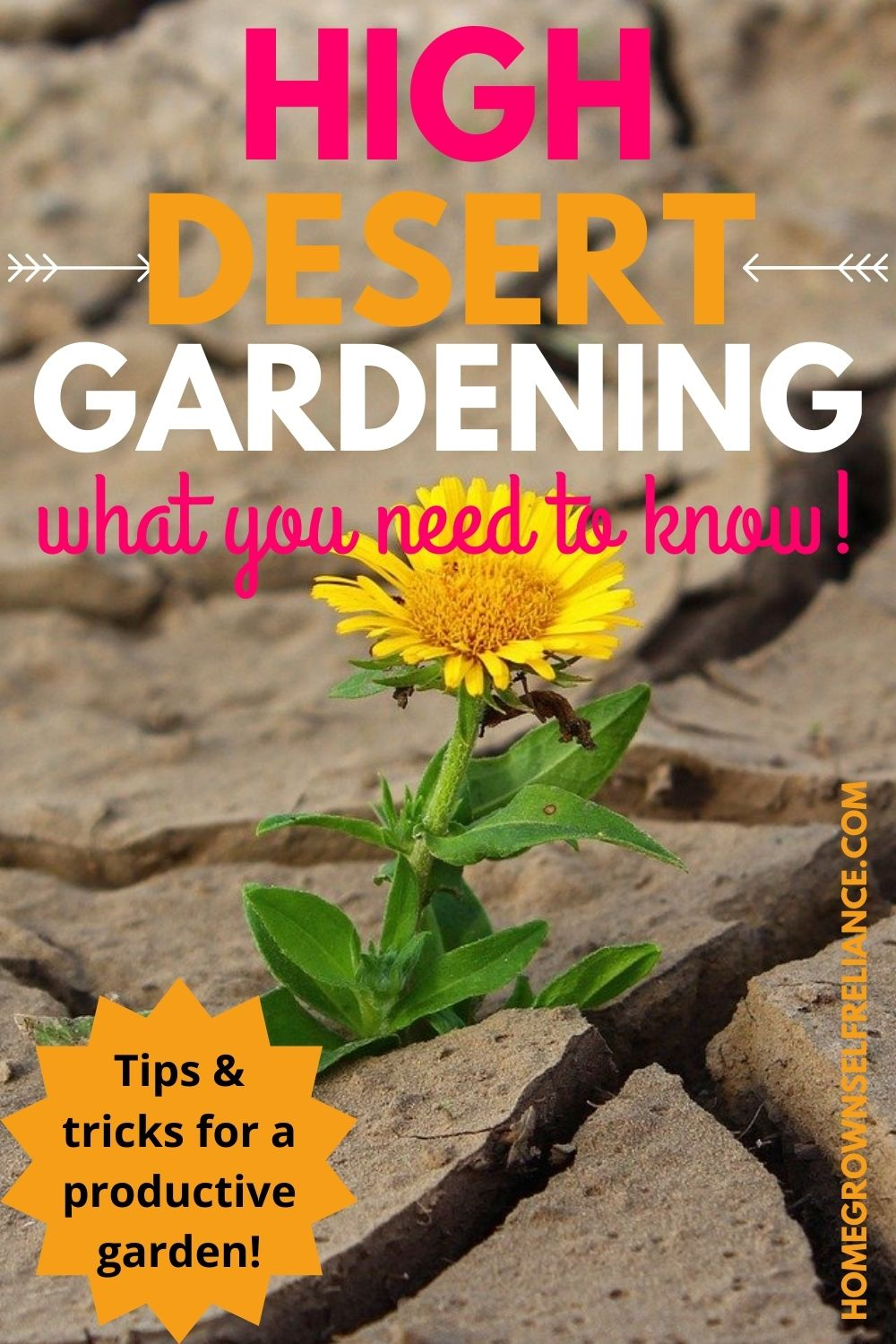 high desert gardening, High Desert Gardening: What You Need To Know