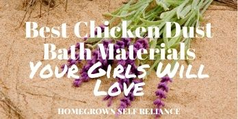 Best chicken dust bath materials your girls will love