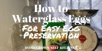 How to Waterglass Eggs for Easy Egg Preservation