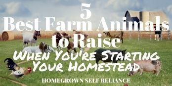 5 Best Farm Animals to Raise When You're Starting Your Homestead